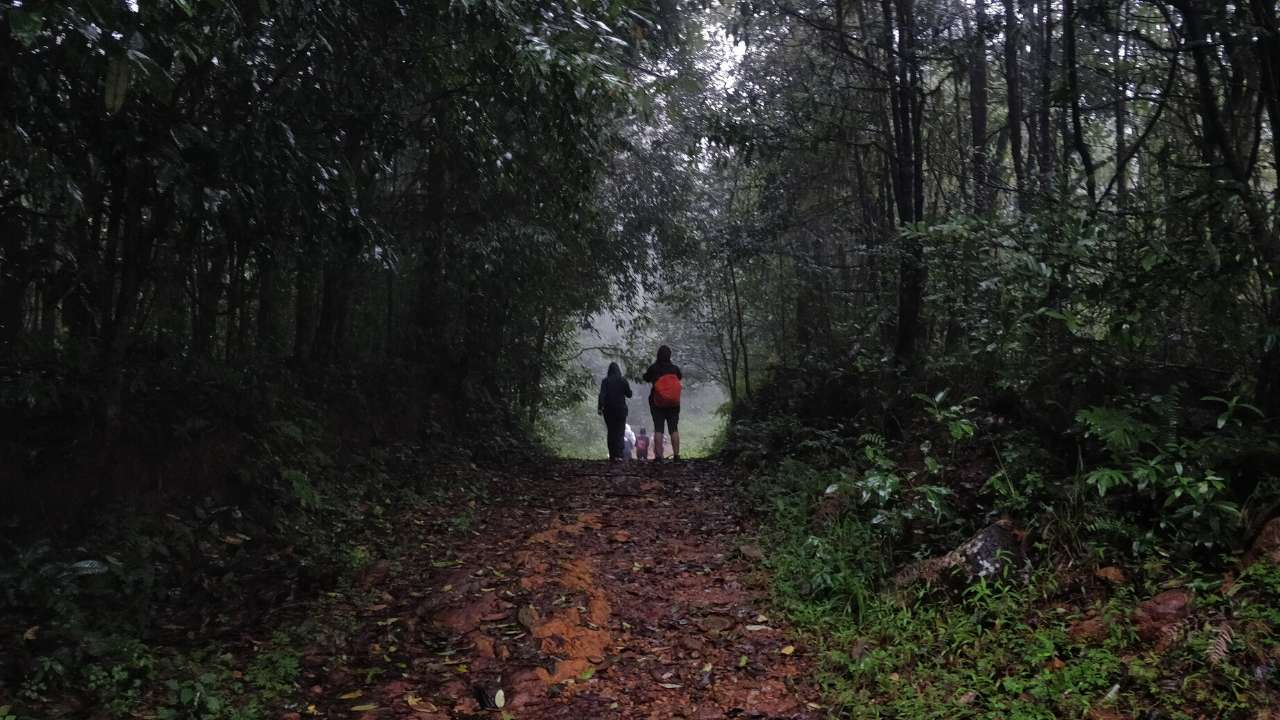 A walk through the misty forests of the Kurinjal Trek