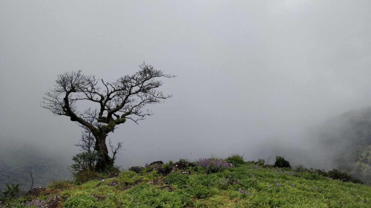 Traverse the Scotland of India by choosing the Shepherd's Coorg Trail!