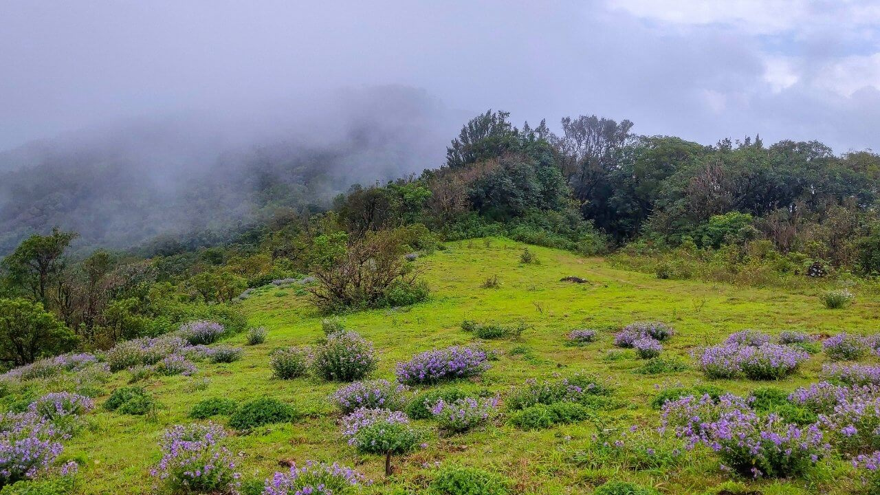 Take the Shepherd's Coorg Trail, trudge the violet mountains