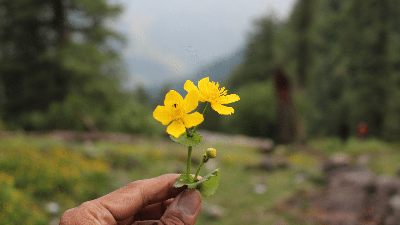 Beautiful flowers at Grahan Valley
